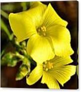 Little Yellow Flower Canvas Print