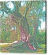 Live Oak On The Teche Canvas Print