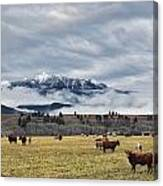 Livingstone Range And Pastureland Canvas Print