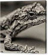 Lizard In Bw Canvas Print