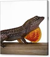 Lizard Portrait Canvas Print