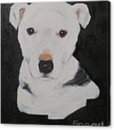 Lobo My Gentle Pitbull Canvas Print