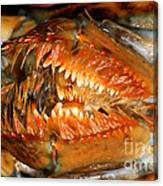 Lobster Mouth Canvas Print