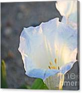 Loco Weed Flowers 1 Canvas Print