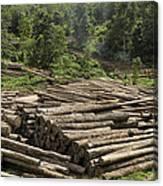 Logs In Logging Area, Danum Valley Canvas Print