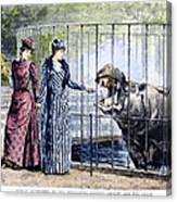 London Zoo, 1891 Canvas Print