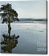 Lone Cypress Tree In Water.  Canvas Print
