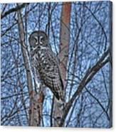 Lone Gray Owl Canvas Print