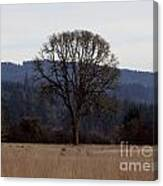 Lone Meadow Canvas Print