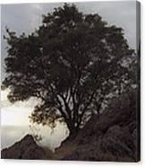Lone Oak 2 Canvas Print