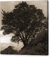 Lone Oak 2 Sepia Canvas Print