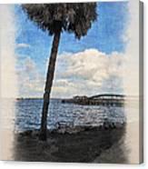 Lone Palm Tree Canvas Print
