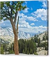 Lone Pine At Half Dome Canvas Print