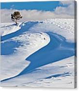 Lone Pine In Winter Canvas Print