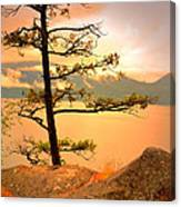 Lone Tree At Ellison Park Canvas Print
