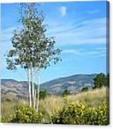 Lone Tree Colorado Canvas Print