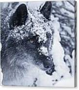 Lone Wolf In Snow Canvas Print
