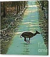 Lonely Deer Canvas Print