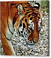 Lonely Tiger Canvas Print