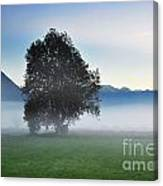 Lonely Tree In The Fog Canvas Print