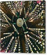 Long Spined Sea Urchin Canvas Print