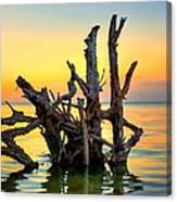 Longboat Key Tree Canvas Print
