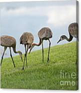 Look What I Found Canvas Print