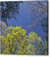 Looking Up In Spring Canvas Print