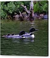 Loons With Twins 2 Canvas Print