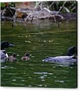 Loons With Twins Canvas Print