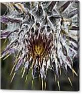 Lost Coast Thistle Canvas Print