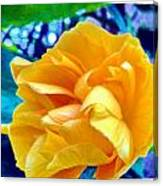 Lost In Garden Canvas Print