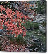 Lost Maples Fall Afternoon Canvas Print