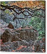 Lost Maples Hiking Trail Canvas Print
