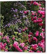 Lots Of Blooms Canvas Print