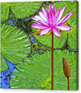 Lotus Blossom And Water Lily Pads Canvas Print