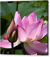 Lotus Bud--here Is How You Do It Dl065 Canvas Print