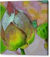 Lotus Dreaming 1 Canvas Print