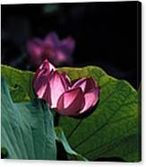 Lotus--echoes Of Light 24h Canvas Print