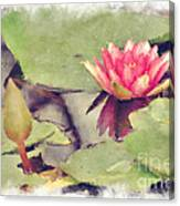 Lotus Flower12 Canvas Print