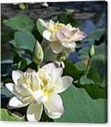Lotus in Bright Sunlight Canvas Print