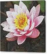 Lotus In The Rain 3 Canvas Print