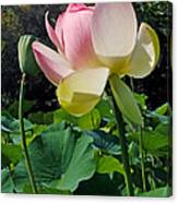 Lotus Lily Standing Tall Canvas Print