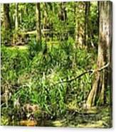 Louisiana Wetland Canvas Print