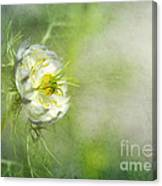 Love In A Mist Floral Canvas Print