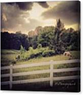 Love This Photo Of A #horse On A #hill Canvas Print