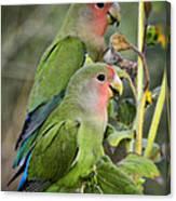 Lovebird Couple  Canvas Print