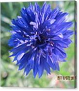 Lovely Dark Blue Gentleman's Button Canvas Print