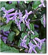 Lovely In Lavender Canvas Print