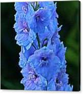 Lovely Larkspur Blue Canvas Print